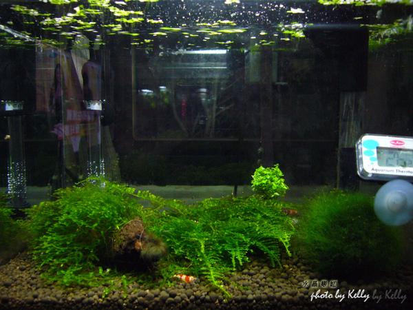 蝦缸-09.jpg