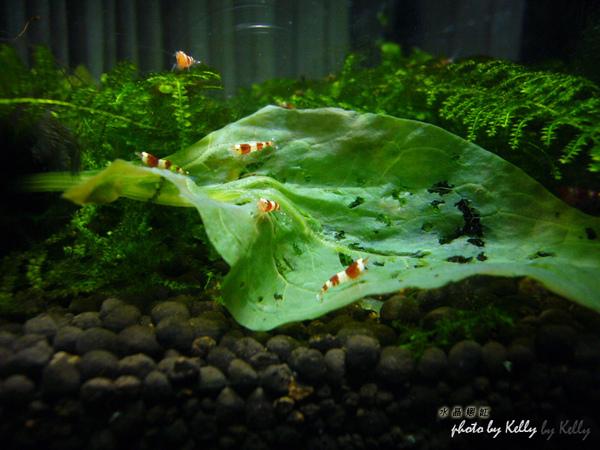 蝦缸-3月-09.jpg