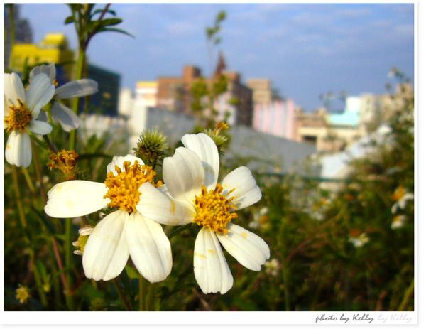 台中文心森林公園-08.jpg