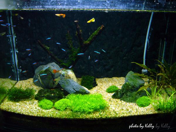 魚缸第三造景_01.jpg