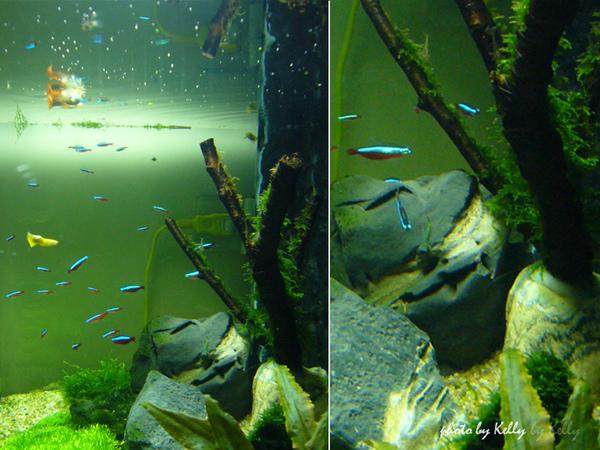 魚缸第三造景_05.jpg