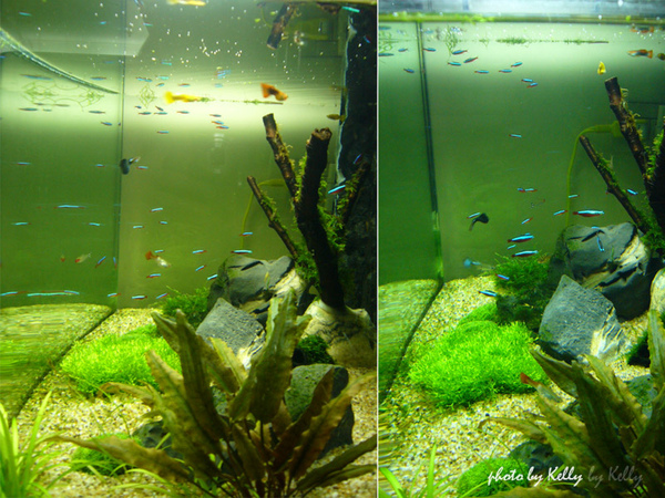 魚缸第三造景_07.jpg
