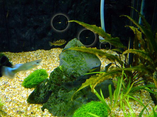 魚缸第三造景_09.jpg