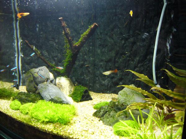 魚缸第三造景_10.jpg