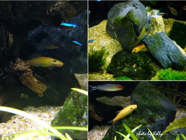 魚缸第三造景_12.jpg