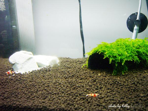蝦缸_第二缸-05.jpg