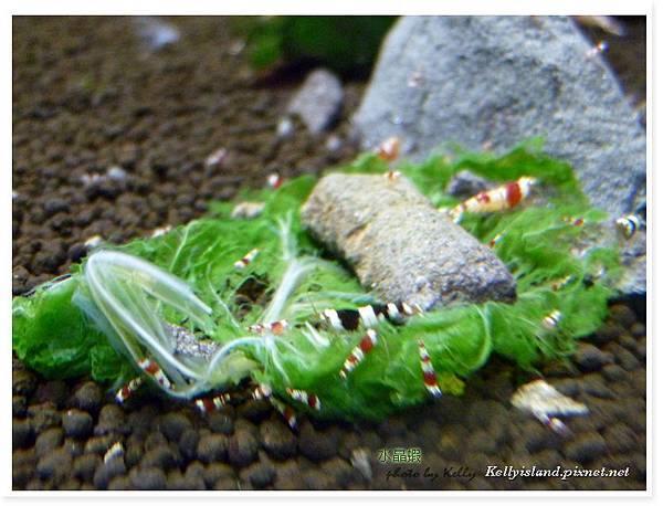 2011_3月爆蝦之吃飯篇_14.jpg