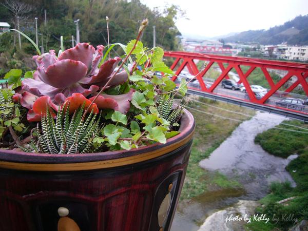大湖草莓-10.jpg