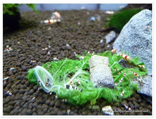 2011_3月爆蝦之吃飯篇_17.jpg
