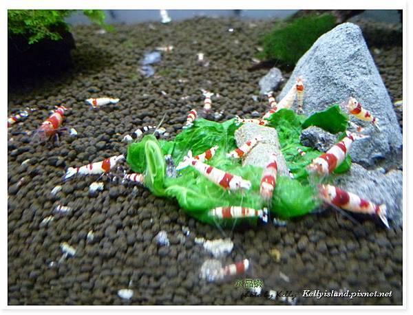 2011_3月爆蝦之吃飯篇_08.jpg