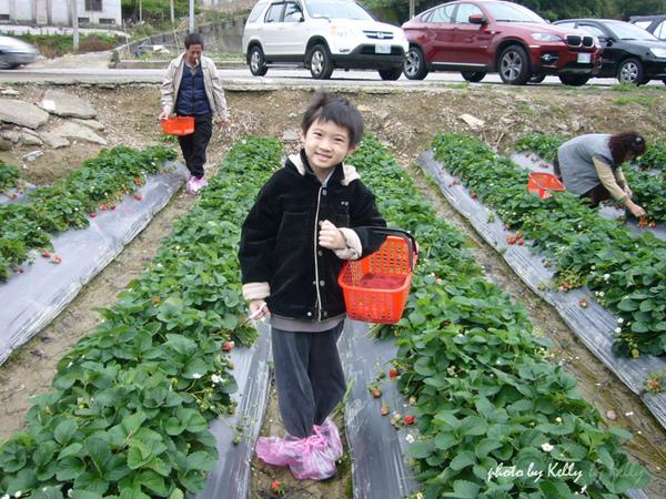 大湖草莓-08.jpg