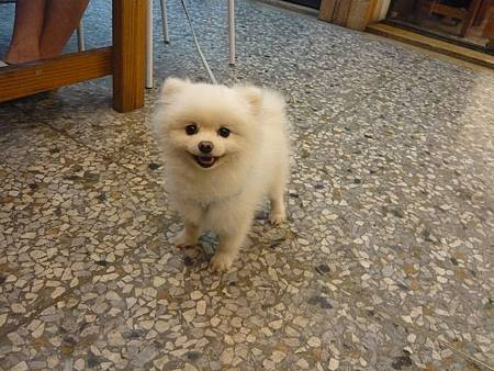 puppy (1)