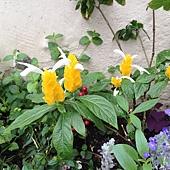 小花園 (2)