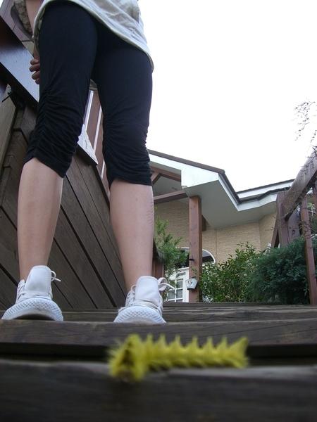 Cool caterpillar?
