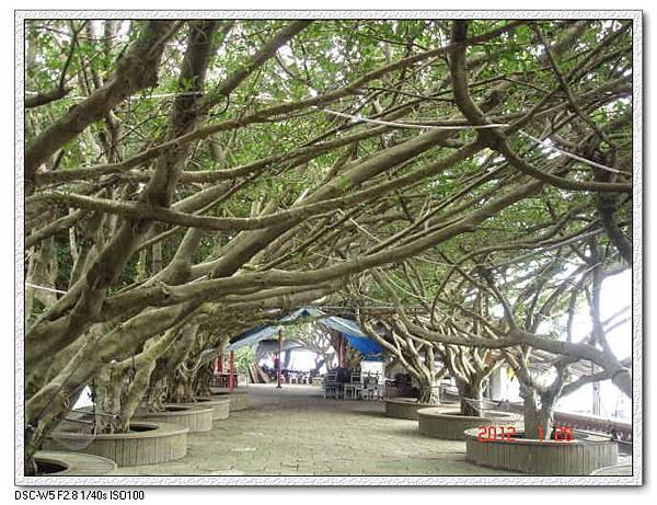 榕樹公園3.jpg