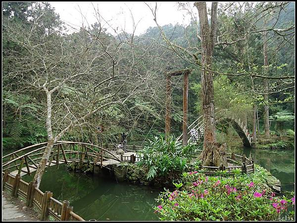 溪頭森林園區13