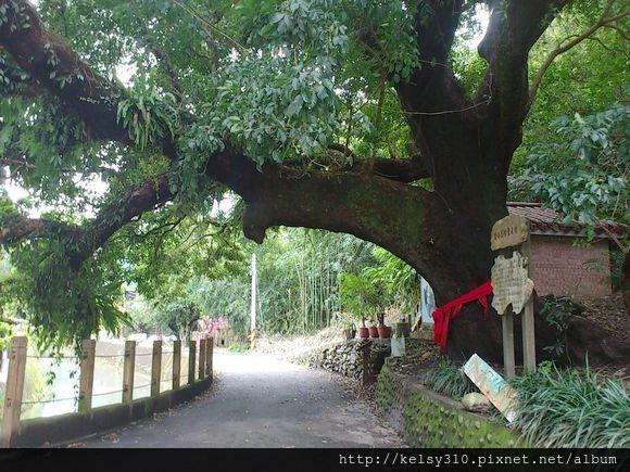 大樹4.jpg