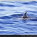 賞鯨10.jpg