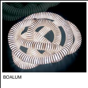boalum.jpg