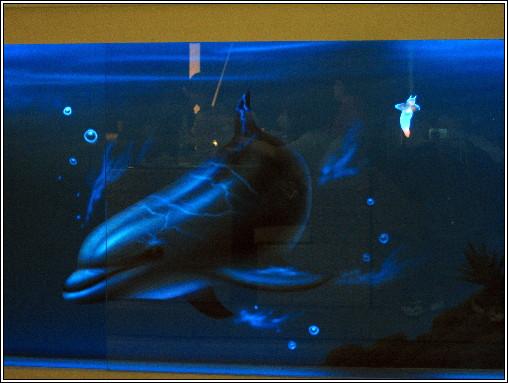10_水岸餐廳吧台夜晚的海豚.JPG