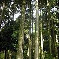 126_古樹嵾天2.JPG