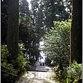 128_古樹嵾天4.JPG