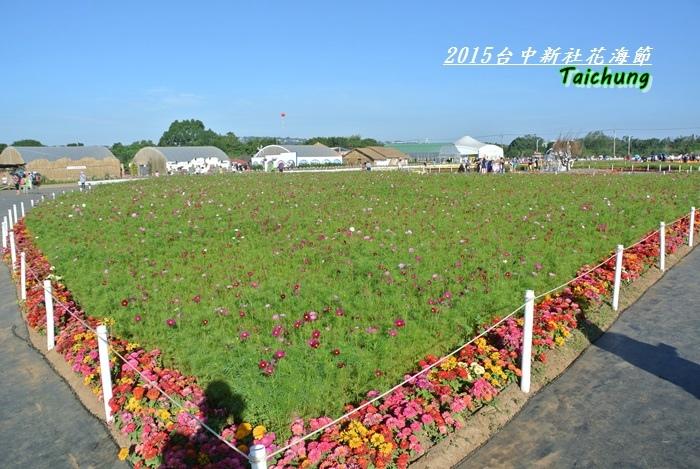 台中新社花海26