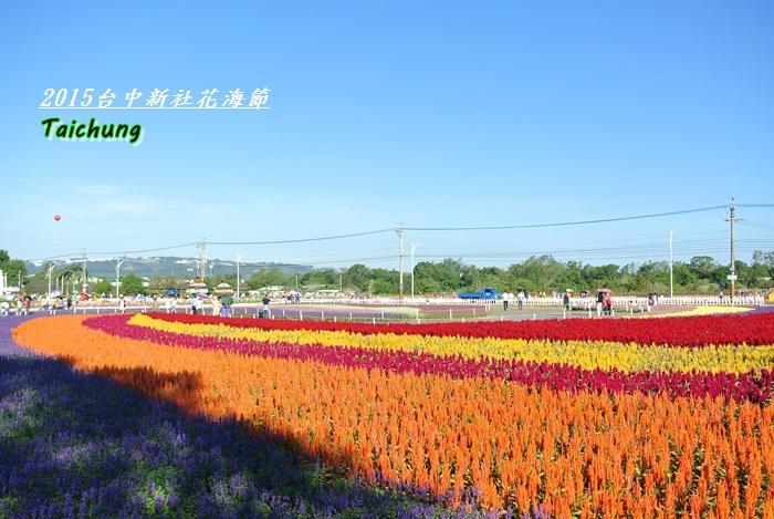 台中新社花海32