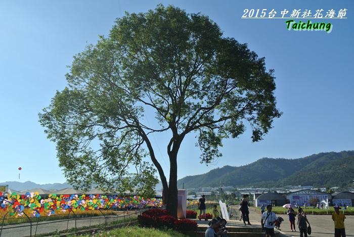 台中新社花海33