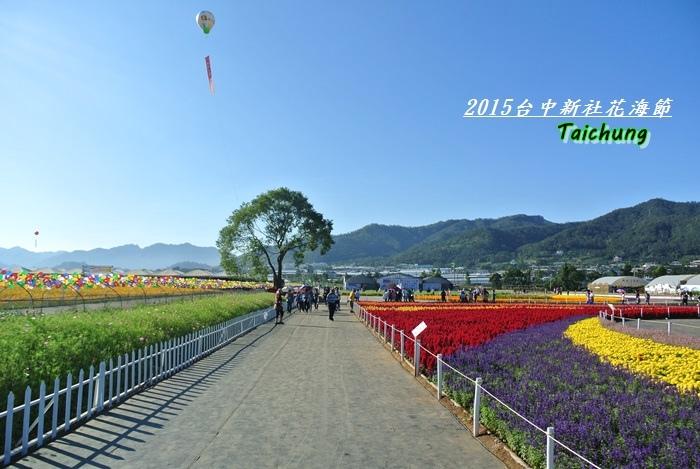 台中新社花海34