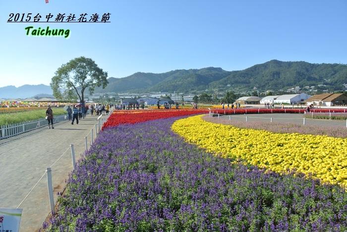 台中新社花海35