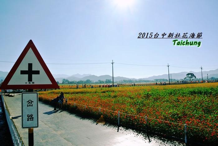 台中新社花海40