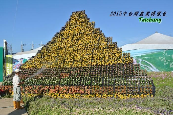 台中新社花海79