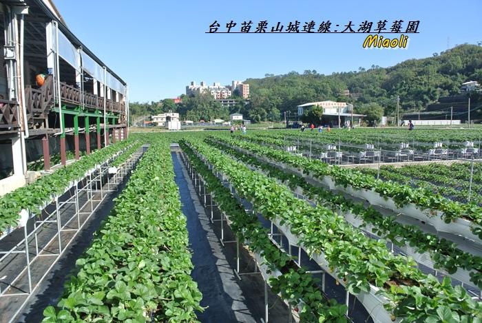 台中苗栗山城旅行160.JPG