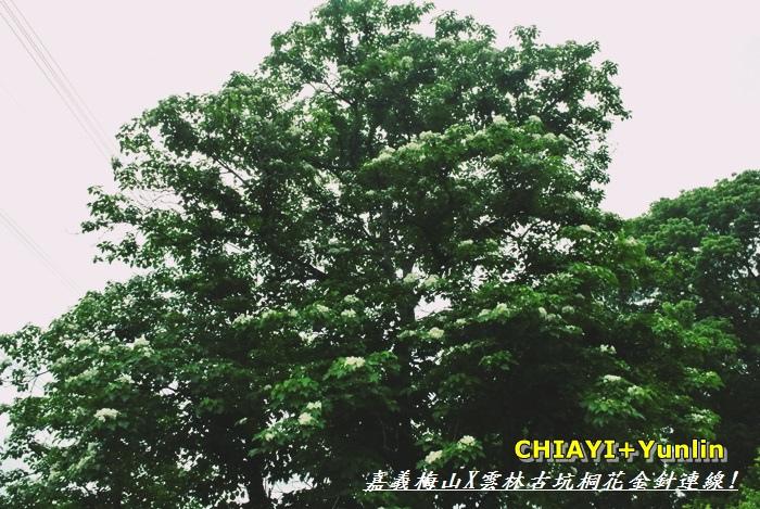 嘉義梅山+雲林古坑連線2.JPG