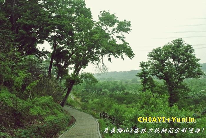 嘉義梅山+雲林古坑連線13
