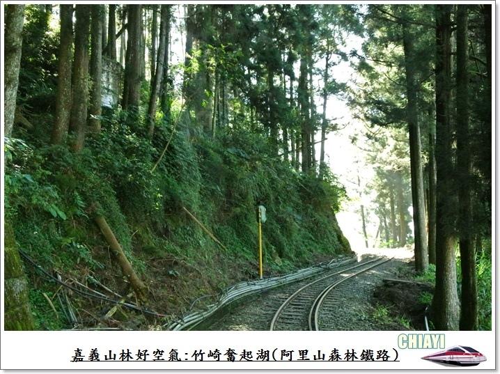 嘉義山林好空氣23