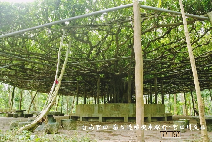 官田-麻豆連線機車旅行20