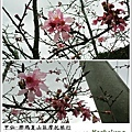 甲仙-那瑪夏機車旅行45