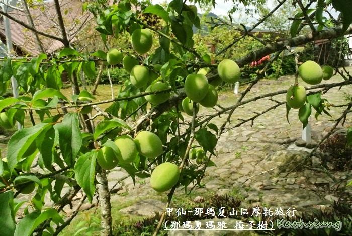 甲仙-那瑪夏機車旅行58
