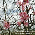 甲仙-那瑪夏機車旅行60