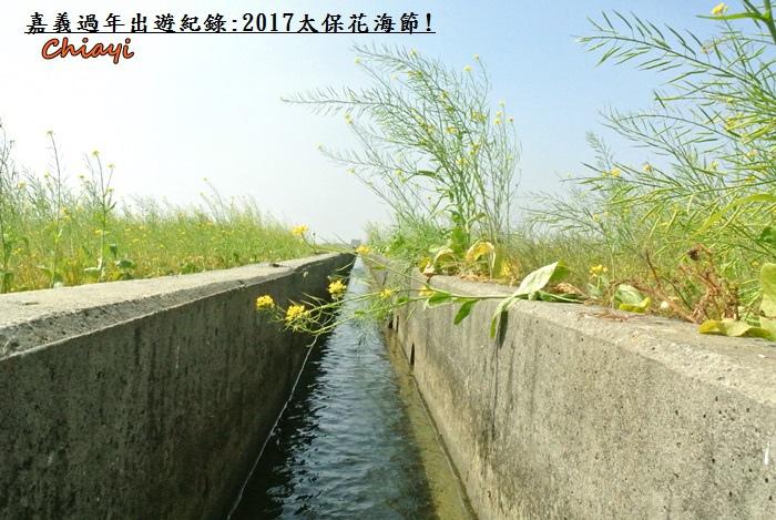 2017太保花海紀錄5.JPG