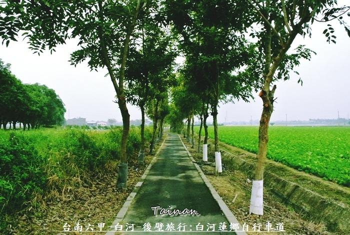 台南白河蓮鄉自行車道3.JPG