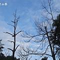 龍崎光節空山祭10.JPG