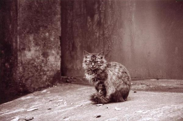 寂寞殺死一隻貓。