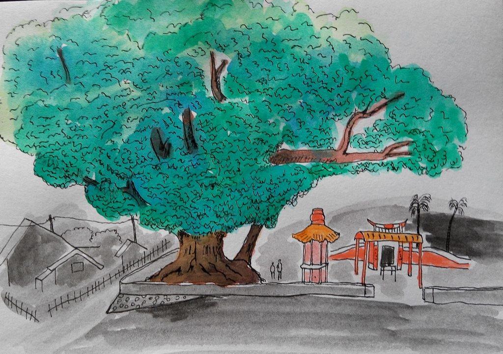 136縣道上的老樟母女樹