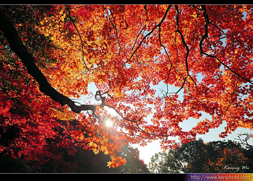 kyo-shis06.jpg