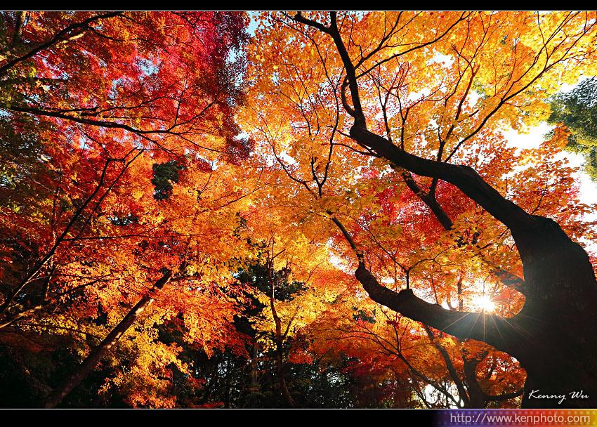 kyo-shis07.jpg