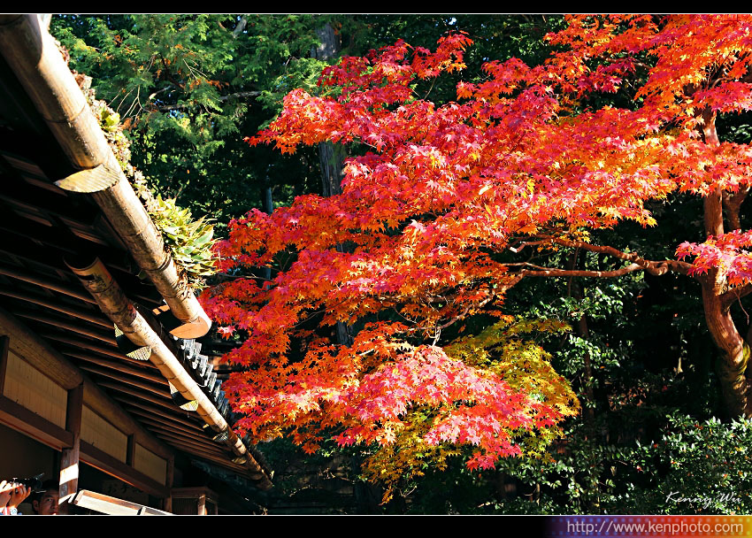 kyo-shis11.jpg