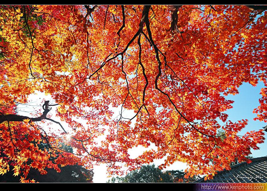 kyo-shis13.jpg
